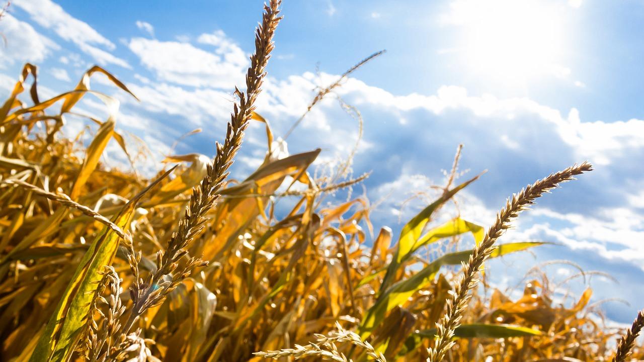 Skutki zbyt intensywnego rolnictwa