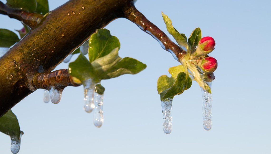 Ochrona roślin przed mrozem jest ważnym czynnikiem w walce o wysoki plon.